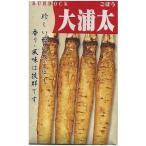 野菜種 牛蒡 大浦太 20ml