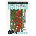 野菜種 ミニトマト フラガール 100粒 トキタ種苗