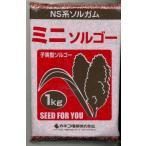 緑肥 ソルガム ミニソルゴー 1kg  カネコ種苗(株)