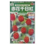 花の種 オール1割引き!赤花千日紅 ストロベリーフィールド 小袋 サカタのタネ