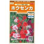 花の種 オール1割引き! ホウセンカ カメリア咲き混合 小袋  サカタのタネ