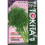 ハーブの種 コリアンダー ナリーパクチー 10ml トキタ種苗