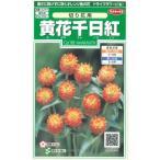 花の種 オール1割引き! 黄花千日紅 切り花用 小袋   サカタのタネ