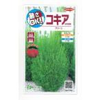 花の種 オール1割引き!コキア(ほうき草)グリーン  小袋 サカタのタネ