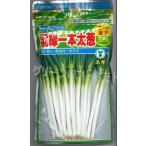 野菜種 ねぎ 羽緑一本太葱 コート種子 5000粒 トーホク交配