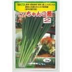 野菜種 ねぎ ちゃんこ葱 20mlトキタ種苗
