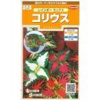 花の種 コリウス レインボーミックス 小袋  サカタのタネ