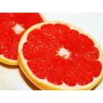 【1年間枯れ保証】【立木果樹】グレープフルーツ/スタールビー赤 15cmポット  【あすつく対応】