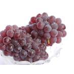 【1年間枯れ保証】【つる性果樹】ブドウ/デラウェア 15cmポット  3本セット 送料無料 【あすつく対応】