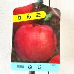 リンゴ 苗木 富士 12cmポット苗 ふじリンゴ りんご 苗 林檎