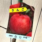 リンゴ 苗木 富士(ふじ) 12cmポット苗 りんご苗(ワイ性)