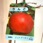 リンゴ 苗木 ジョナゴールド 12cmポット苗(ワイ性) りんご苗
