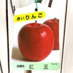 リンゴ 苗木 紅玉(こうぎょく) 12cmポット苗 りんご苗