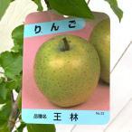 リンゴ 苗木 王林(おうりん) 12cmポット苗 りんご苗