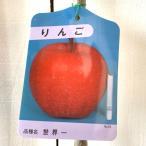 ショッピング苗 リンゴ 苗木 世界一 12cmポット苗 りんご 苗 林檎