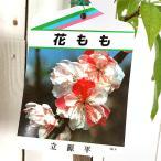 花桃 苗木 立源平(たちげんぺい) 12cmポット苗(咲き分け) はなもも苗