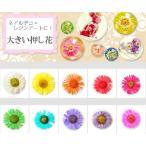 【ジェルネイル】ネイルアート・レジンデコにオススメ♪押し花♪デイジー風♪新色入り10色10個