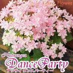 アジサイ ダンスパーティー 5寸鉢 カゴ付き 母の日ギフト