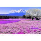 ししゅう糸 DMC糸 クロスステッチ刺繍キット 布地に図柄印刷 富士山 (B)