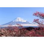ししゅう糸 DMC糸 クロスステッチ刺繍キット 布地に図柄印刷 富士山 (A)