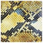 AMAZING SNAKEHEADS アメイジング・スネイクヘッズ/AMPHETAMINE BALLADS (LP/LTD) 輸入盤 CD