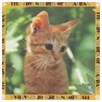 坂本龍一/小猫物語 CD