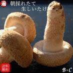 送料無料 お得なB・C級品 生しいたけ 3kg  味は一級品 朝採れたて菌床栽培 椎茸