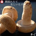 お得なB・C級品 生しいたけ 500g  味は一級品 朝採れたて菌床栽培 生椎茸