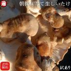 椎茸 送料無料 5kg 生シイタケ 訳あり  500g×10 味は一級品 朝採れたて菌床栽培 生椎茸