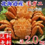 毛ガニ 特大 2kg (1kg×2尾) 北海道産 ギフト 浜茹で ボイル 冷凍 カニ味噌 3特 4特 良品 選別 厳選 毛蟹 お取り寄せ