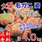 毛ガニ 姿 ボイル 4kg(6〜7尾入) 大型サイズ 北海道産 毛蟹 年末指定承ります