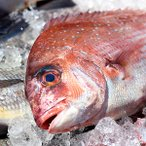築地直送/養殖 鯛(たい)1尾(1kg前後サイズ)(国産)/冷蔵便