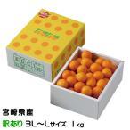 宮崎県産 完熟きんかん『たまたま』 風のいたずら(ちょっと訳あり)  3L〜Lサイズ (約1.0kg) 化粧箱入り  (送料無料)