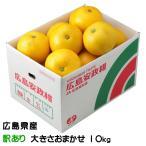 安政柑 あんせいかん  広島県 因島産 ちょっと訳あり 大きさおまかせ 10kg  送料無料 みかん 柑橘