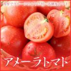 高糖度フルーツトマト 『アメーラ』  秀品 Mサイズ  約12玉入り (約1.0kg) 化粧箱入り (静岡県産・長野県産)