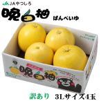 お歳暮 みかん 晩白柚 ばんぺいゆ 訳あり 3Lサイズ 4玉 10kg 熊本県産 JAやつしろ ミカン 蜜柑