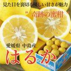 みかん はるか 風のいたずら 訳あり 大きさおまかせ 5kg 愛媛県 中島産 送料無料 柑橘 ミカン
