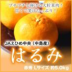 JAえひめ中央(中島産)『はるみ』 赤秀 Lサイズ(約5.0kg) (送料無料)