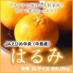 JAえひめ中央(中島産)『はるみ』 赤秀 2Lサイズ(約5.0kg)  (送料無料)