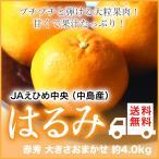 (送料無料) JAえひめ中央(中島産)『はるみ』 赤秀 大きさおまかせ(約4.0kg)