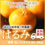 (送料無料)  JAえひめ中央(中島産)『はるみ』 赤秀 3L〜Lサイズ(約1.5kg)