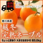 (送料無料) 香川県産 『越冬完熟ネーブル』 風のいたずら(ちょっと訳あり) 大きさおまかせ(約5.0kg)