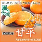 (送料無料)   愛媛県産 『甘平』 かんぺい  風のいたずら(ちょっと訳あり) 大きさおまかせ(約3.0kg) カンペイ みかん