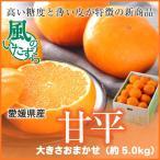 (送料無料)   愛媛県産 『甘平』かんぺい  風のいたずら(ちょっと訳あり) 大きさおまかせ(約5.0kg)カンペイ みかん
