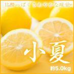 みかん 温室小夏 こなつ 高知県産 大きさおまかせ 約5kg ギフト 送料無料  みかん