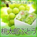 ぶどう 桃太郎ぶどう 青秀 約600g×2房 送料無料 岡山県産 香川県産 お中元  葡萄 ブドウ