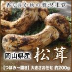 (送料無料) 岡山県産『国産松茸』(つぼみ 開き) 大きさお任せ(約200g) (9月下旬より発送)