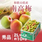 梅 梅 紀州 南高梅 和歌山県産 秀品 2Lサイズ 10kg 送料無料 うめ 青梅 生梅