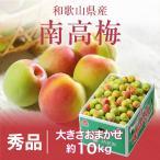 梅 梅 紀州 南高梅 和歌山県産 秀品 大きさおまかせ 10kg 送料無料 うめ 青梅 生梅