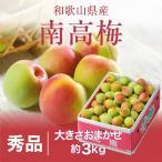 梅 紀州 南高梅 和歌山県産 秀品 大きさおまかせ 3kg 送料無料 うめ 青梅 生梅